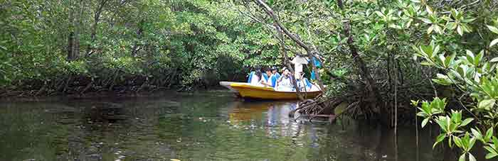 mangrove tour lembongan island